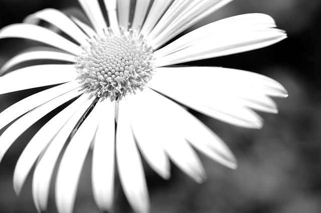Big Happy Flower