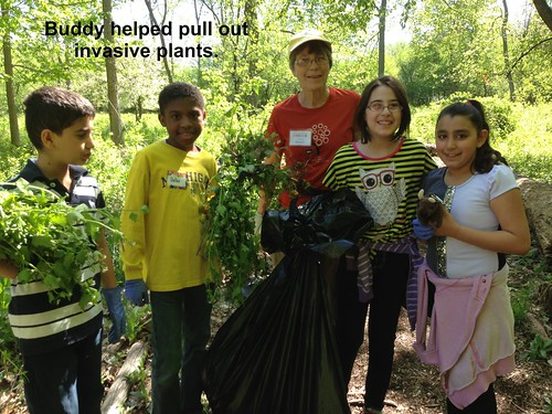 Buddy pulling invasive plants with text