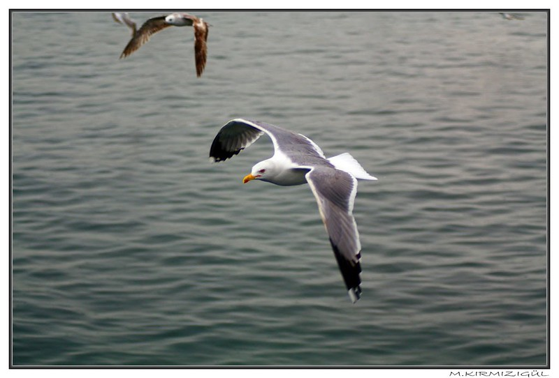 IMG_0441_ps