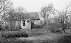 Strandheim ved NGU på Lade (1983)