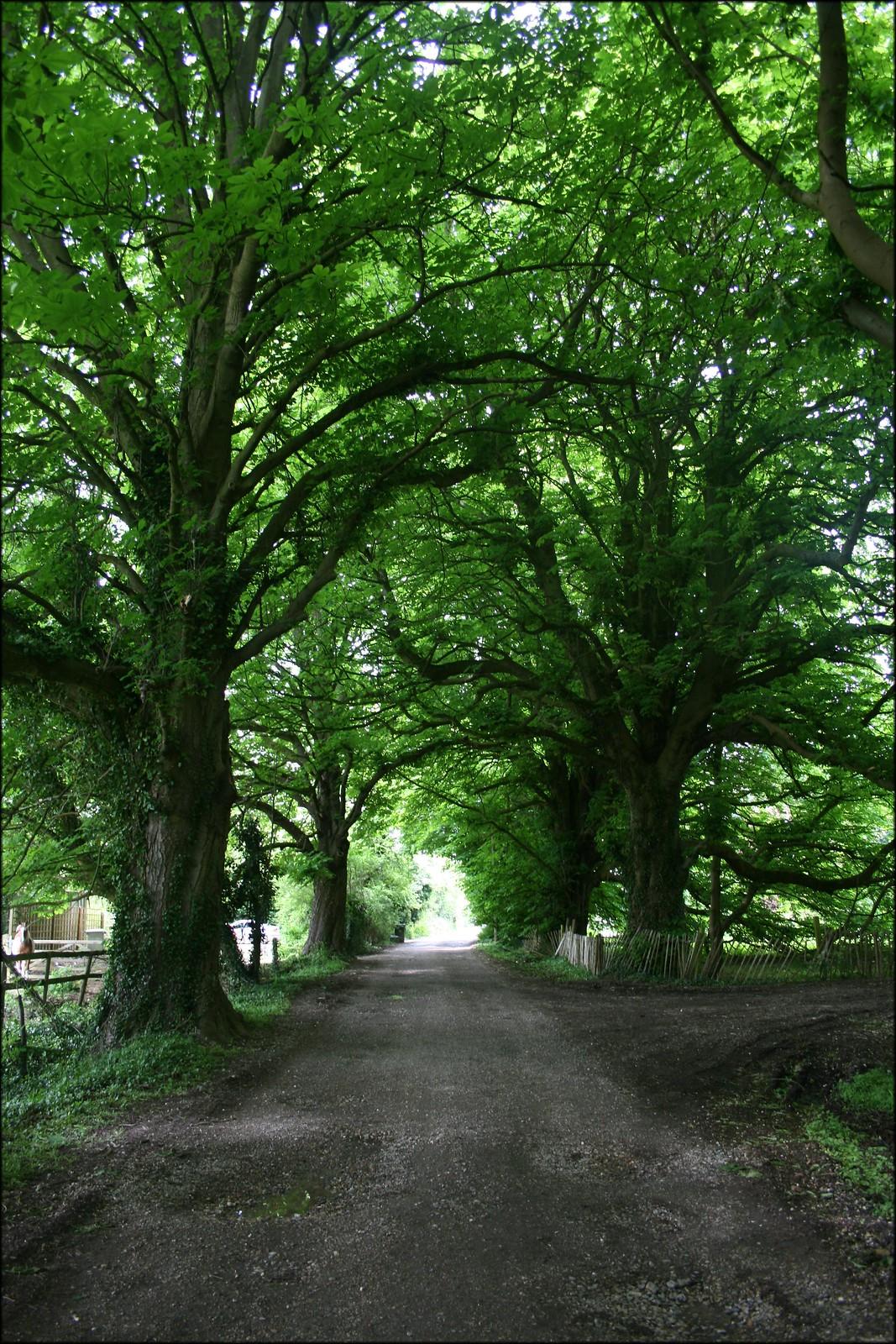 Wooded track near Aldermaston