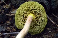 plant(0.0), produce(0.0), jackfruit(0.0), mushroom(1.0), flora(1.0), fungus(1.0), edible mushroom(1.0),