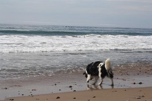 Ben investigates the ocean