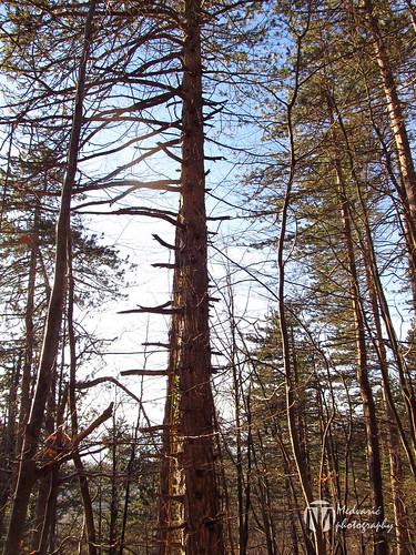 croatia foresttreewood