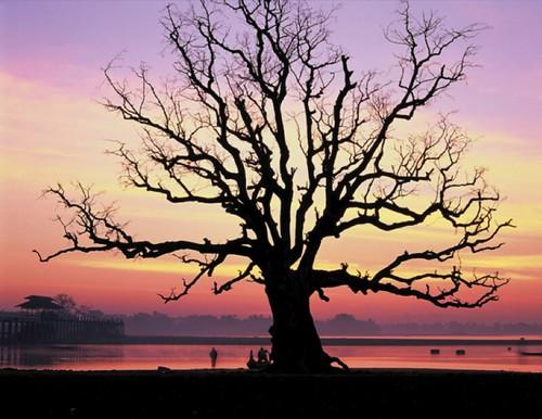 塔里木河流域的胡楊老樹,陳維滄攝
