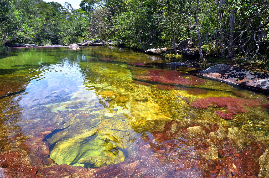 The clear waters of Caño Cristales, Colombia. [1024x678]