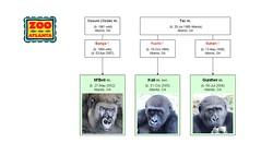 Gorilla Family - Atlanta - Bachelor Group 2