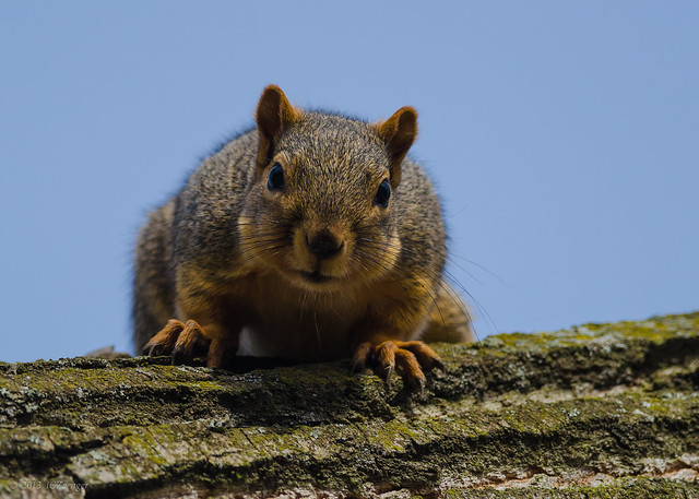 More squirrel 02