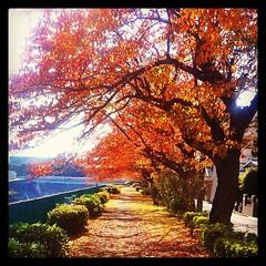 Autumn in Fujisawa