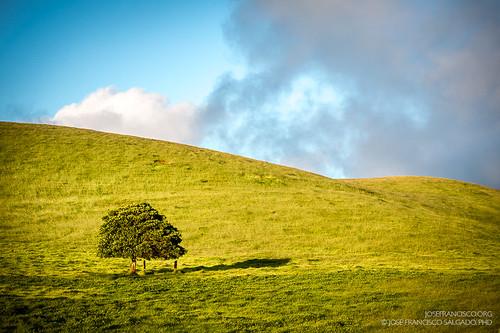 usa tree hawaii us flora nikon unitedstatesofamerica hill árbol nikkor loma d4 bigislandofhawaii northkohala 70200mmf28gvrii kohaladistrict