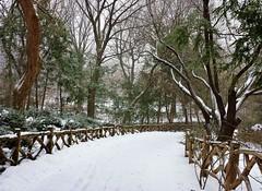 Central Park-Shakespeare Garden, 01.25.14