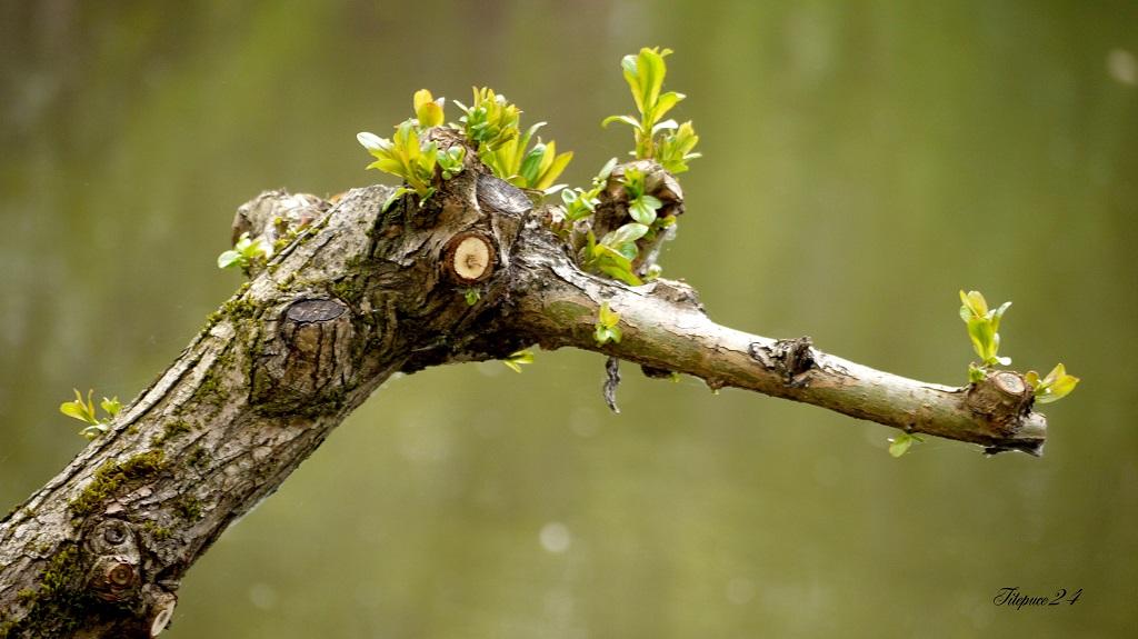 Le héron-arbre guette 14073495076_a3787943d0_o