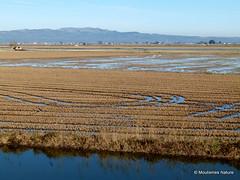 Spain; Ebro Delta, January 2015