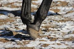 Pferd im Winter 2015