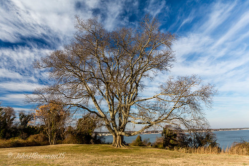 trees virginia yorktown february 2015 yorkcounty riversandstreams yorkriver canon2470l greatskies majestictrees february2015