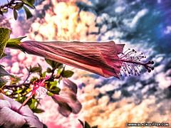 Flower [2014_07_28]