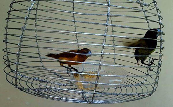 birdcage 090215