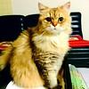 #cat #kitty #kitties #pet