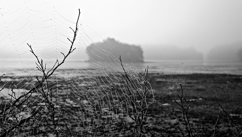 blackandwhite bw lake nature water fog dark landscape outdoors island photography photo pond flickr foto image outdoor massachusetts sony spiderweb foggy picture newengland cybershot capture plainvillemassachusetts turnpikelake dscw300 newenglandshores