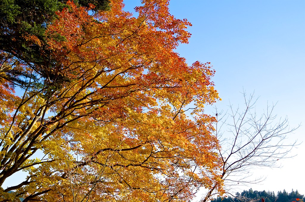 20131123_Mt.Otake 040