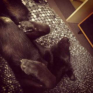 Erst ins Bett schleichen und dann auch noch schnarchen... 😴