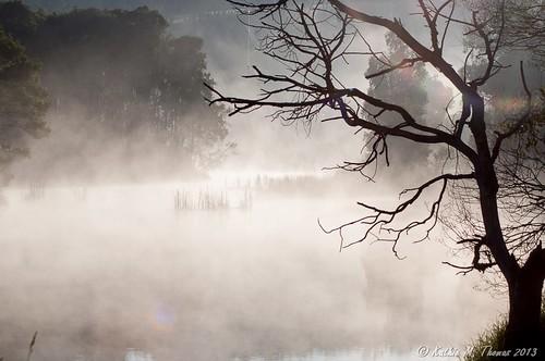Mist at the park