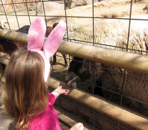 Boise Zoo 4-21-13