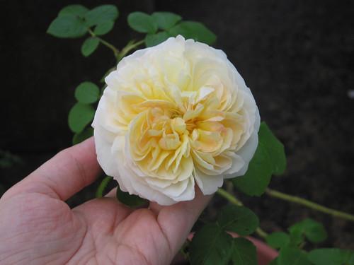 Marianne Flower #2, Day 2. by Leenechan