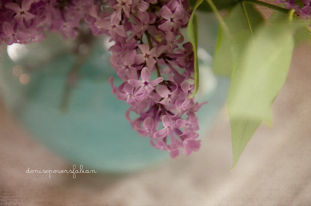 Lilacs on Mother's Day