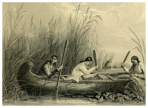 014-Cosechando arroz salvaje-The Indian tribes of the United States..1884-H. R. Schoolcraft