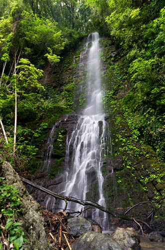 白藤の滝 2013.5.12-1(滝下)