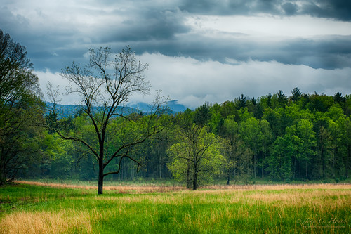 spring nikon tennessee nik nationalparks smokies hdr cadescove everydaymiracles d700 johnchouse