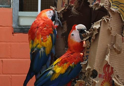 Vogelpark 2013 182