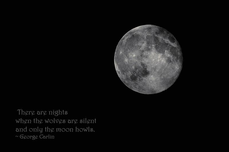 20130623-006_web960_wolves