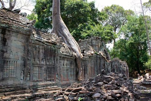 trees have overgrown the walls of Preah Khan