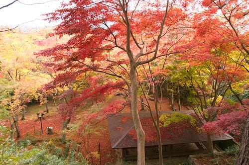 【写真】2012 紅葉 : 笠置山もみじ公園/2020-05-28/IMGP6148