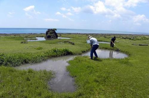 研究人員在野外曾經記錄過大田鱉的地點進行調查。(圖片來源:楊平世研究團隊)