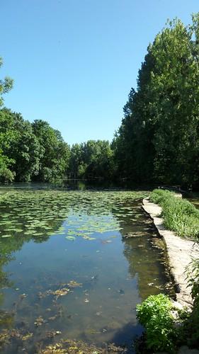 Rivière Le Clain 6
