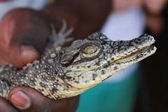 Snake and crocodile farm, Zambia
