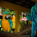 Parrot Show by sydbad