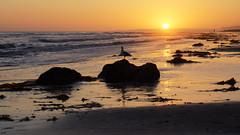 Bird and setting sun