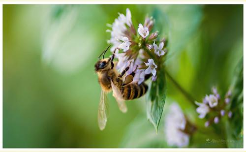 Just `bee`yourself ♥ by DanceofLifeImageMiner
