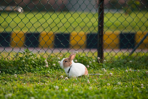 _CSC6226-2寵物兔