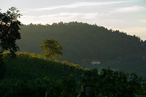 sunrise österreich nikon vineyards nikkor sonnenaufgang vr afs steiermark weinberge 1685 ratsch d7100 ratschanderweinstrase