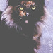 Profile Picture - Brindlestorm by thestormygenesis