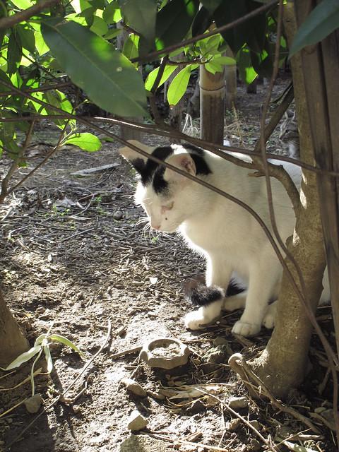 『catzElysium〜石屋の猫6』の画像