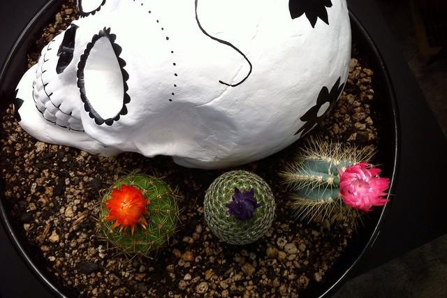 Sugar Skull & Cactus