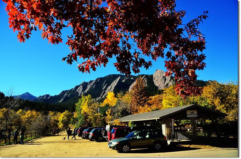 Oak(橡、櫟) in Fall, Chautauqua, Boulder 7