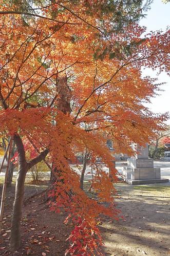 【写真】2013 紅葉 : 妙顕寺/2020-11-01/IMGP4143