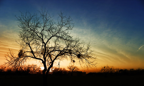 trees sunset cloud color tree nature colors night clouds outside outdoors day